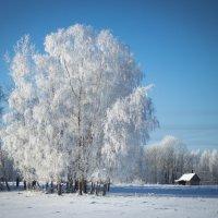 Латвийская зима :: Tatjana Stepanova