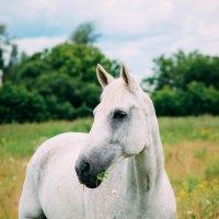 Прогулка в ромашковом поле :: Дарья Вдовина