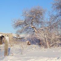 Заметает зима, заметает... :: Елена Ярова