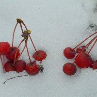 Зимние ягоды. :: nadyasilyuk Вознюк