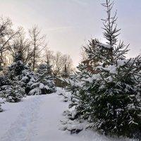 Зима в городе :: Никифорова Галина