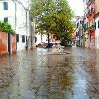 Мокрая Венеция :: Плюшевая Пальма