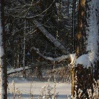 Под белым покрывалом января :: sergej-smv