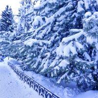 Snow :: Светлана