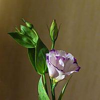 Цветы на фото :: Анатолий Иргл