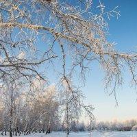 Зимушка-зима :: Ольга
