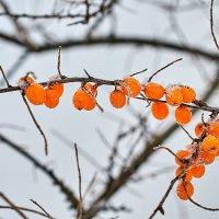 Зимой и летом - одним цветом. :: Андрей Куприянов