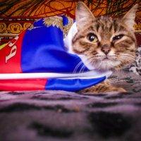 Русская кошка. :: Света Кондрашова