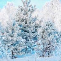 зимнее :: Светлана