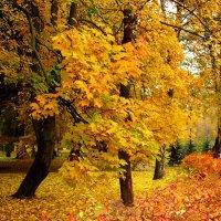 Осенние цвета :: Сергей Карачин