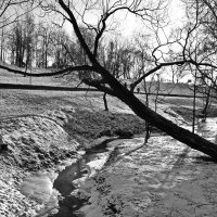 В зимнем парке :: Сергей F