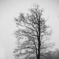 туман :: Евгений Целищев