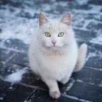 Кошка :: Елена Неведицына