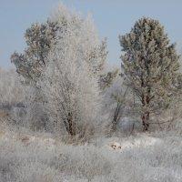 Зимним морозным деньком. :: nadyasilyuk Вознюк