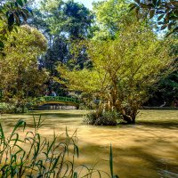 В парке Пренн. Далат. Вьетнам. :: Rafael