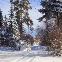 Зима...Снежный запустила свой круговорот... :: Елена Ярова