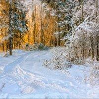 В лесу... :: Александр Никитинский