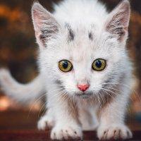 Котёнок :: Studia2Angela Филюта