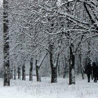 Деревья в снегу. :: Валентина ツ ღ✿ღ