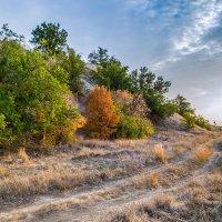 Осень - ты прекрасна :: Андрей Хасаншин