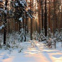 Зимняя природа :: И.В.К. ))