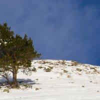 дерево в горах :: Евгений