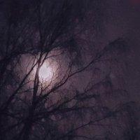 Лунное дерево :: Длинный Кот
