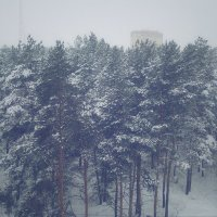 Зимний лес :: Марина Иванова