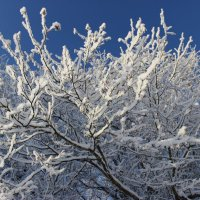 Зимний снежный день :: Mariya laimite