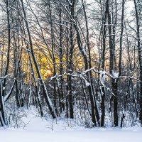 Неспешный зимний ритм :: Сергей В. Комаров