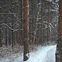 Дорога в лес :: Марина Иванова
