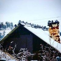 Забайкальские голуби :: Елена Фалилеева-Диомидова