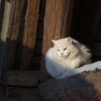 Греется на зимнем солнце :: Светлана