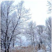 Мороз и иней. :: Чария Зоя