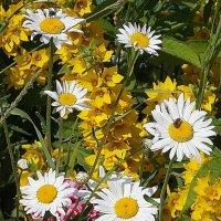 Летняя тема, которую все очень любят - букашка+цветочек :: Фотогруппа Весна.