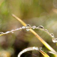 После дождя :: Елена Куценко