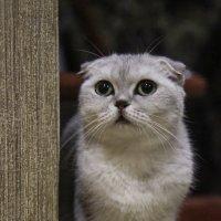 Кошечка :: Виолетта