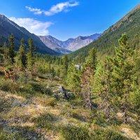 Сибирское горное редколесье :: Виктор Никитин