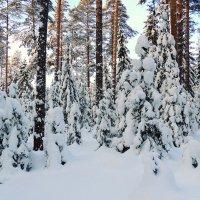 В лесу :: Павлова Татьяна Павлова