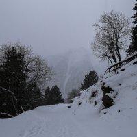 Лес у горы :: Zifa Dimitrieva
