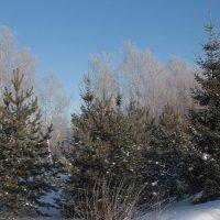 Морозным днем :: Светлана