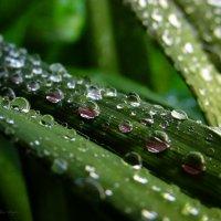 после дождя :: Svetlana Baglai