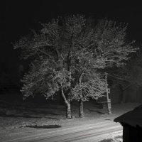 Ночь, улица, фонарь... :: Петр Заровнев