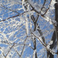 морозно... :: helga 2015