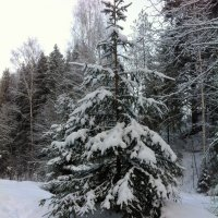 снежно... :: helga 2015