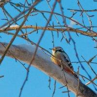 Зимний птах :: Алиса Терновая