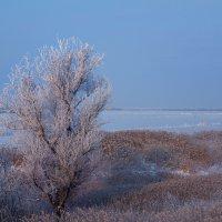 зима :: Ольга Энговатова