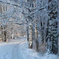 Зимняя дорожка :: Наталья Лунева