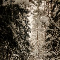 лесное-зимнее :: BioJ .
