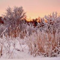зимний закат... :: Елена Третьякова